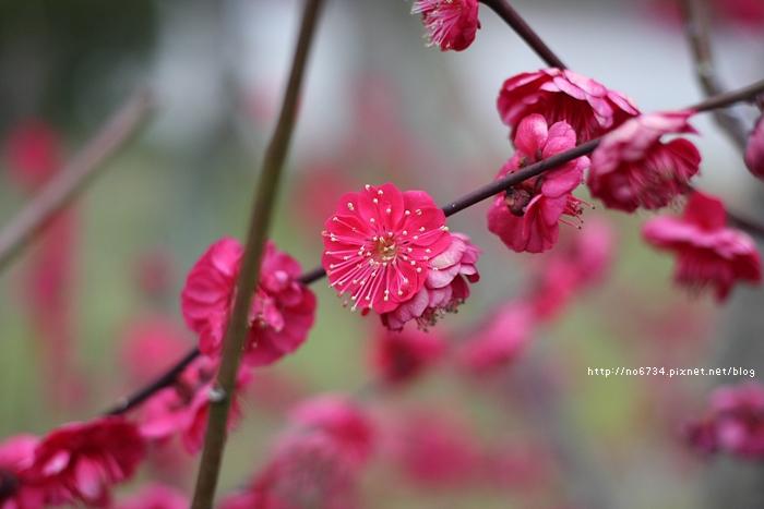 20140301_Fukuoka_1135 f
