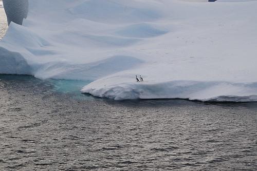 778 Antarctic Sound met aalscholvers