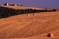 Italy: In Tuscany