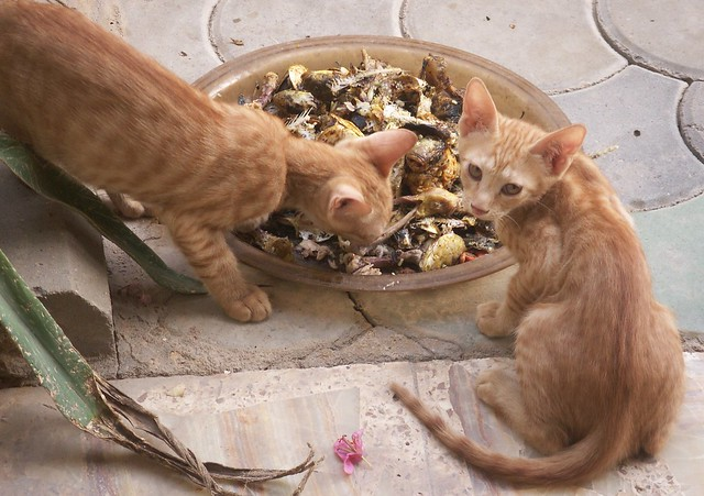 Feral Cats Food Web More Than  Connections