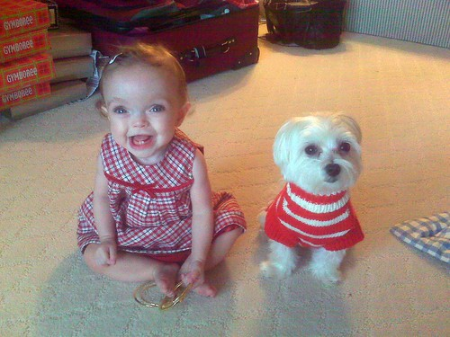Merry Christmas from Maddie & Rigby!
