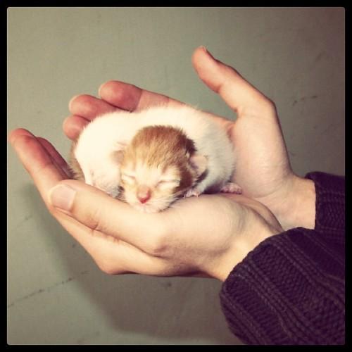 Gatitos recién nacidos (2008)