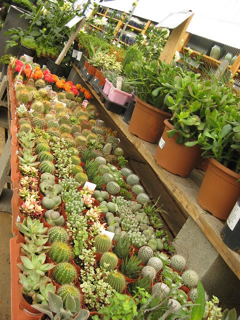 Cactus and Succulent shelves Green Acres Nursery and