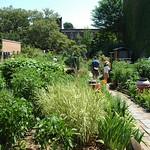 Hollenback Community Garden