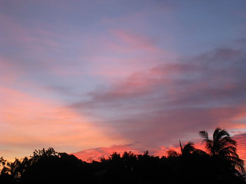pink trees sunset sky clouds florida dusk homestead