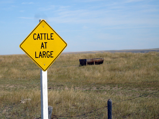 Cattle at Large, by daryl_mitchell