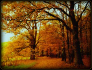 Herbst in Weiershagen - autmn dream