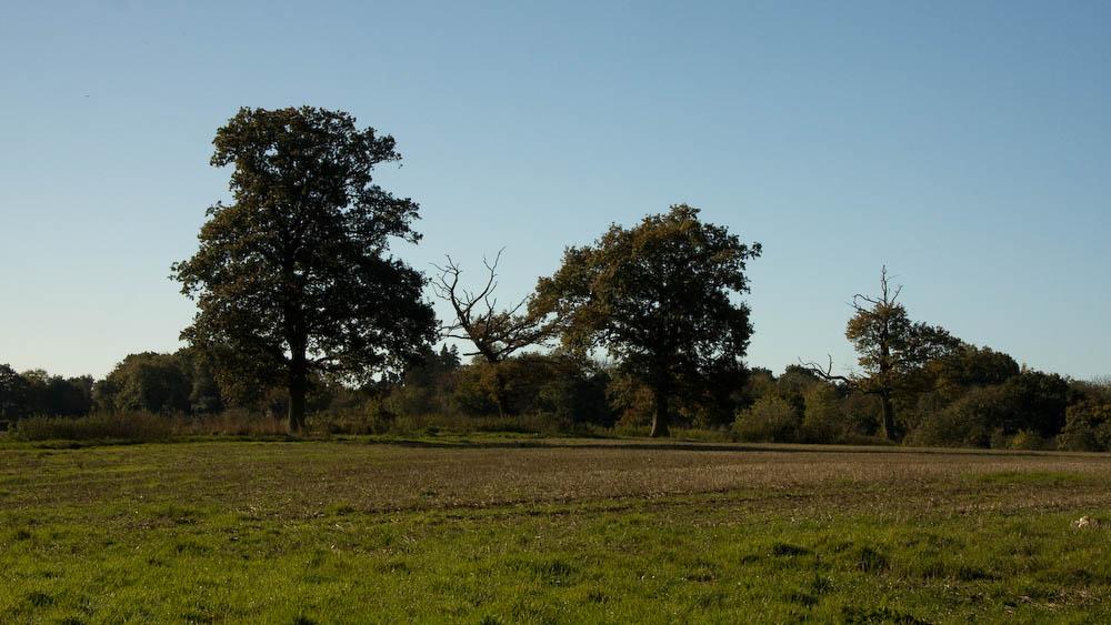 Near Holmwood