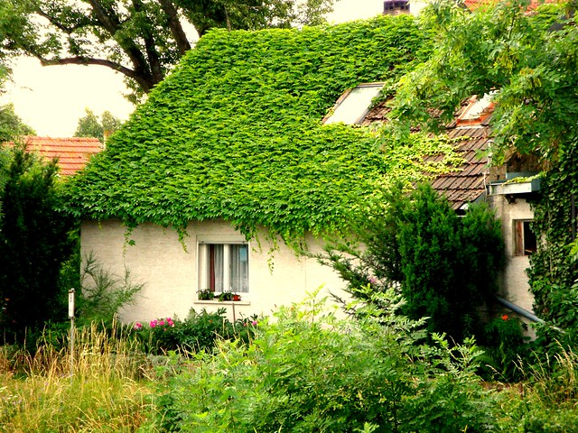 Ivy Covered Cottage On The Main