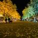 Festival of Lights - Unter den Linden - Berlin, Germany by Xindaan
