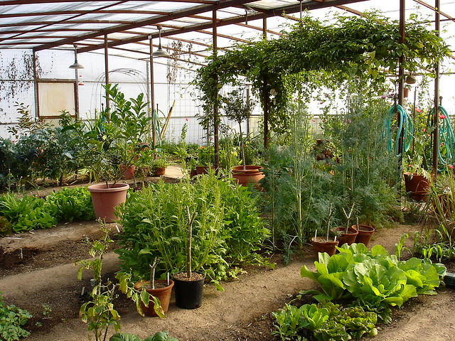 My organic vegetable garden in arizona flickr photo for Enclosed vegetable garden designs