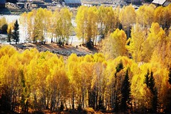 North Xinjiang 北疆 2008