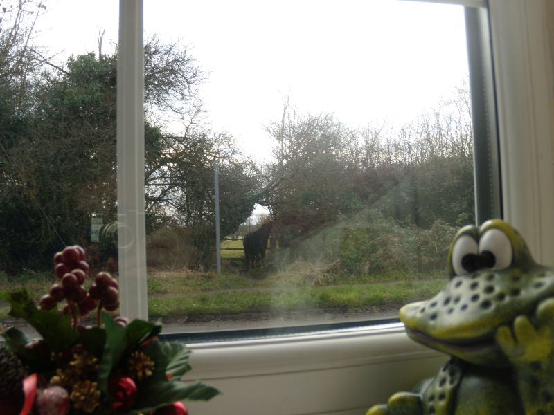 Lunchtime drama - 2 Frog notices cow is on wrong side of fence. Farmer alerted. Chesham Circular