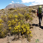 Climbing to Kibo Huts - Mt. Kilimanjaro, Tanzania