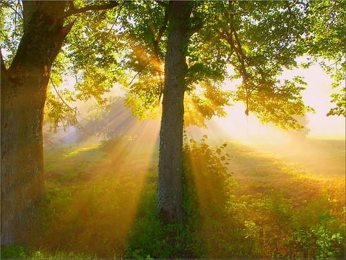 morning trees mist tree misty fog foggy puu puud morningfog hommik udu mistysunrise foggysunrise 35faves päikesetõus olympuse400 mywinners welcometoestonia diamondclassphotographer theunforgettablepictures janne4janne thegoldproject udunepäikesetõus udune