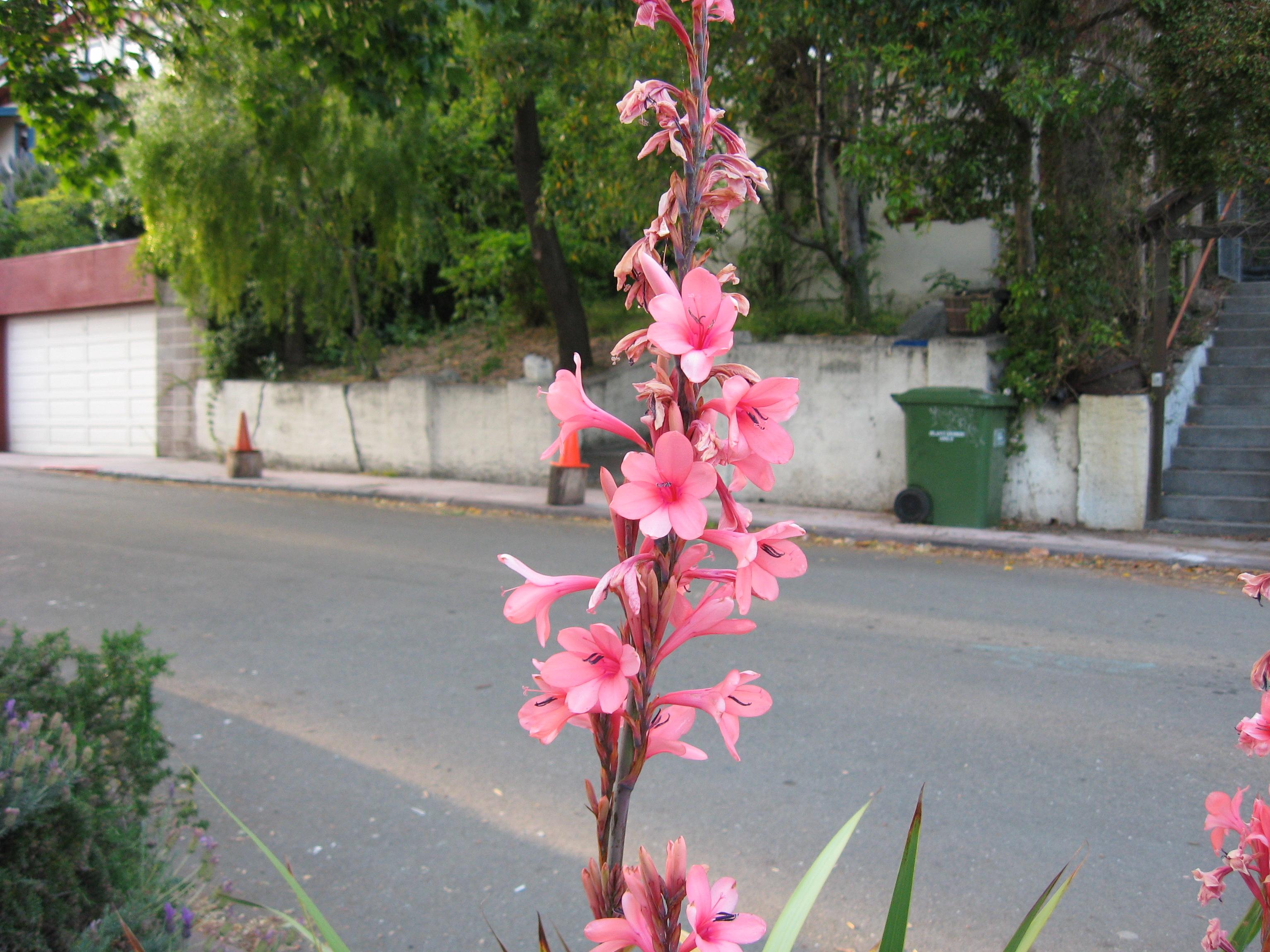 Tall flower
