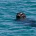 Seals at Keji Seaside Adjunct
