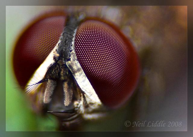 Fly Eye | Flickr - Photo Sharing! Fly Eyes