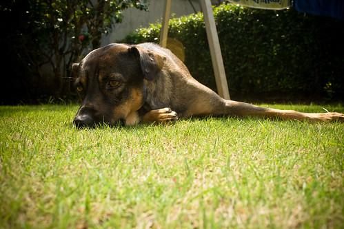dog pet home indonesia jakarta kiko neutering castration baliview