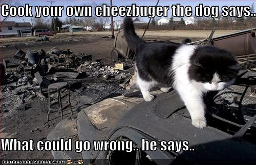 funny-pictures-your-cat-cooks-his-own-cheeseburger