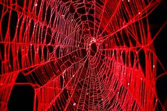 Spider and Spider Web Project 085
