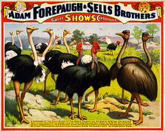 A congress of the great birds of the world, poster for Forepaugh & Sells Brothers, ca. 1898