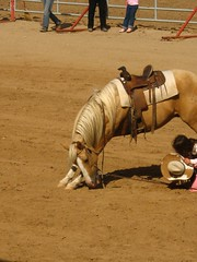 animal sports, western riding, tradition, sports, reining, traditional sport,