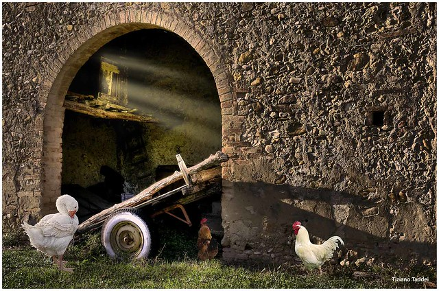 Vecchia fattoria..........