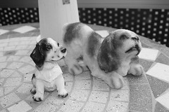 dog breed, animal, puppy, dog, white, pet, mammal, monochrome photography, puppy love, monochrome, black-and-white,