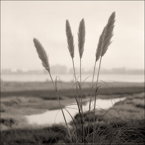 Bay bridge Toll Plaza marsh Tele-rolleiflex APX400 Rodinal 1-50 10min 20C 10-2008 VS 4990 Scan-081026-0006