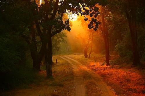 road india nature sunrise canon landscape eos sunray dirttrack bandhavgarh jabalpur 450d canonefs55250mmf456is aksveer