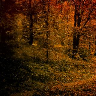 Fall in Walden (II)