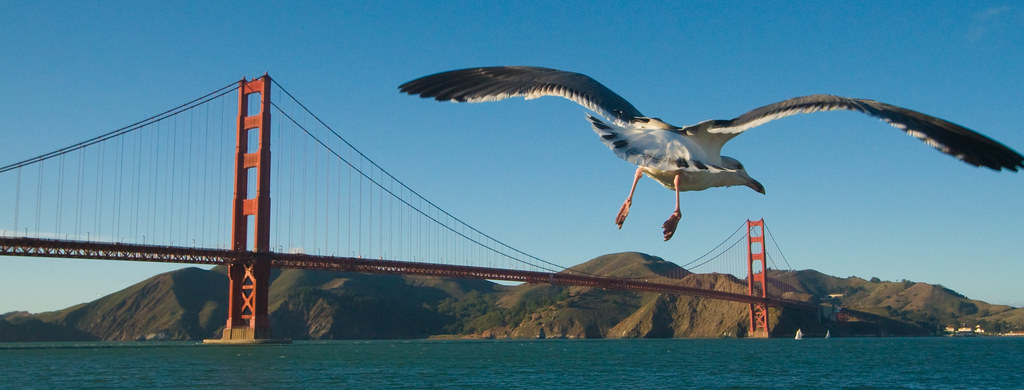 Gull and Golden Gate