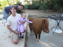 cattle-like mammal(0.0), horse(1.0), vacation(1.0), pony(1.0),