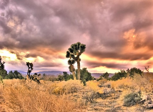 trees sunset tree nature desert joshuatree mojave mojavedesert mohave desertsunset mohavedesert platinumheartaward quantummottle2 joelach
