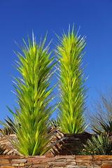 Desert Wild Flower Towers