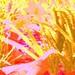 Impressionist Buttercups