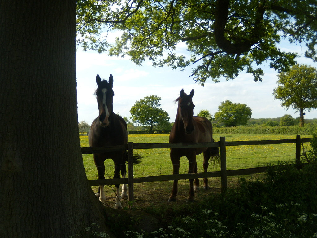 Two Horses Wakes Colne to Bures