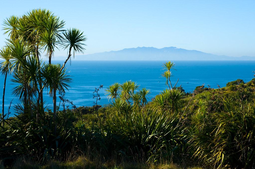 Tiritiri Matangi Island vista