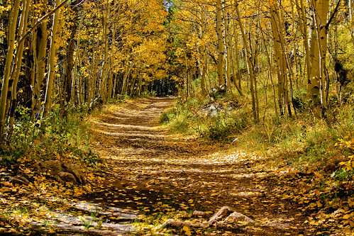 colorado path trail aspen