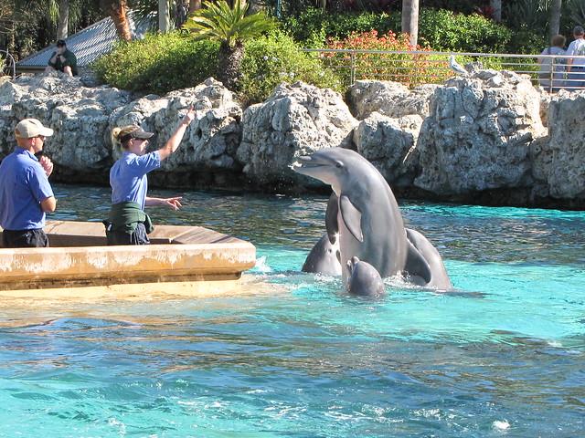 SeaWorld Orlando Mommy Blogger Day! | Flickr - Photo Sharing!