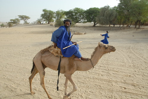 Camel Jockey on edge of the Sahara