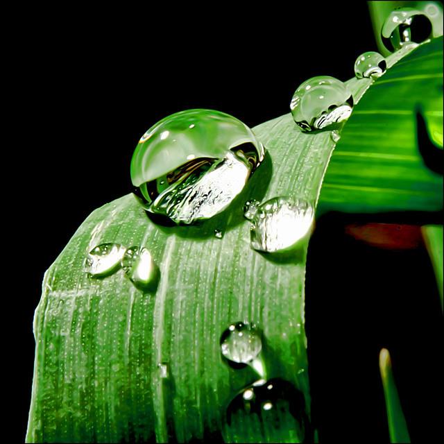 ~ Grass Drops ~