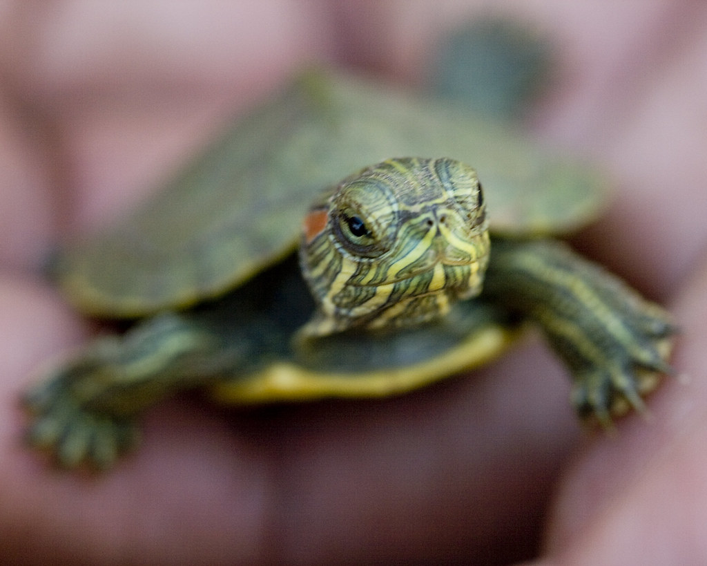 Funny Turtle Names List Of Cute Names For Pet Tortoises