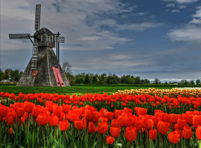 A Tulip Fe(a)st...