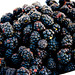 Blackberries by peacelovehappiness1