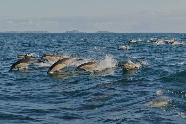 Dolphins chasing us