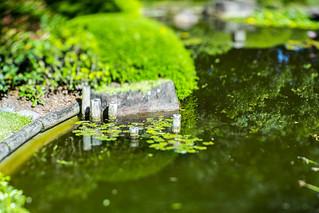 Japanese Garden Tilt Shift 002