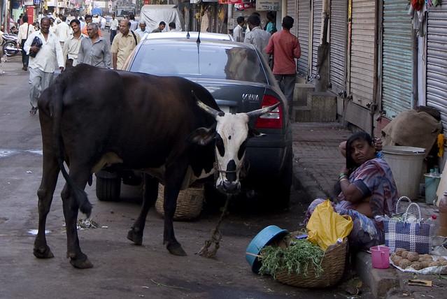 Mumbai street cow
