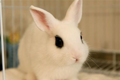 Belaku; Rabbit 3452961882_0d6217abbc